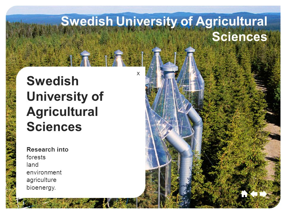 Umeå CultureSportCommerceGrowthEducationLeisu re Future Umeå Culture SportCommerce Growth EducationLeisure Future Swedish University of Agricultural Sciences Research into forests land environment agriculture bioenergy.