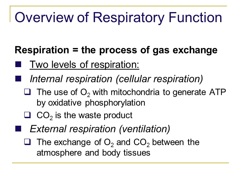 Overview of Respiratory Function Respiration = the process of gas exchange Two levels of respiration: Internal respiration (cellular respiration) The