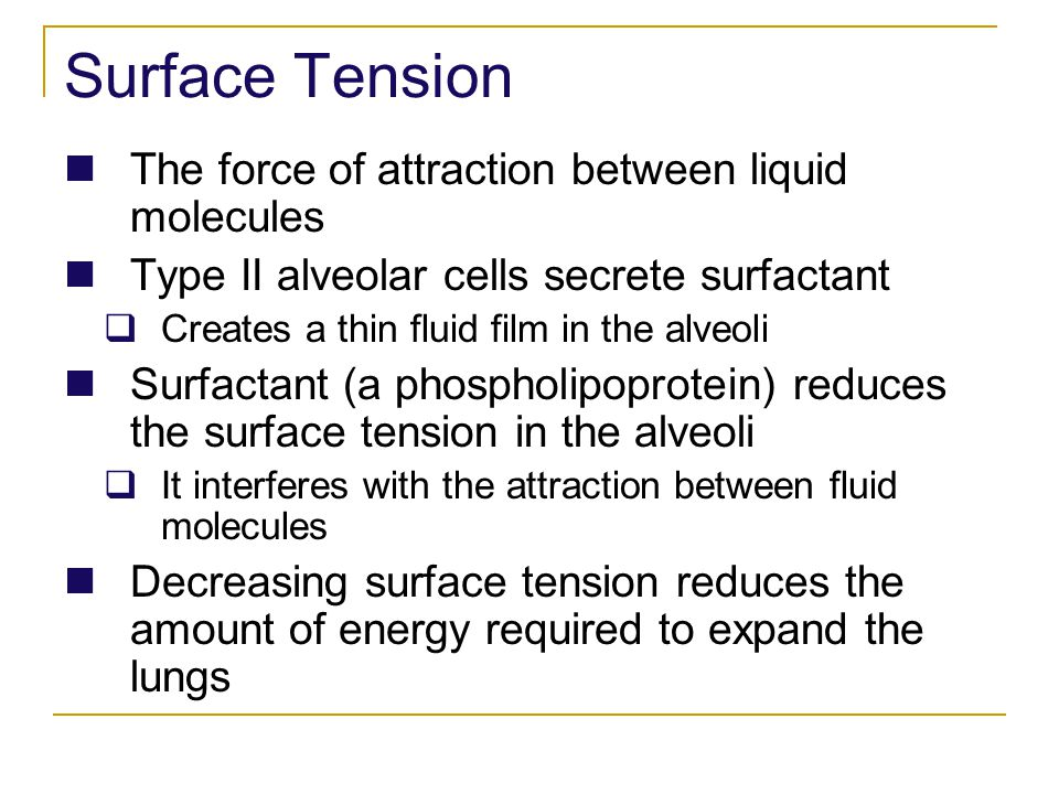 Surface Tension The force of attraction between liquid molecules Type II alveolar cells secrete surfactant Creates a thin fluid film in the alveoli Su