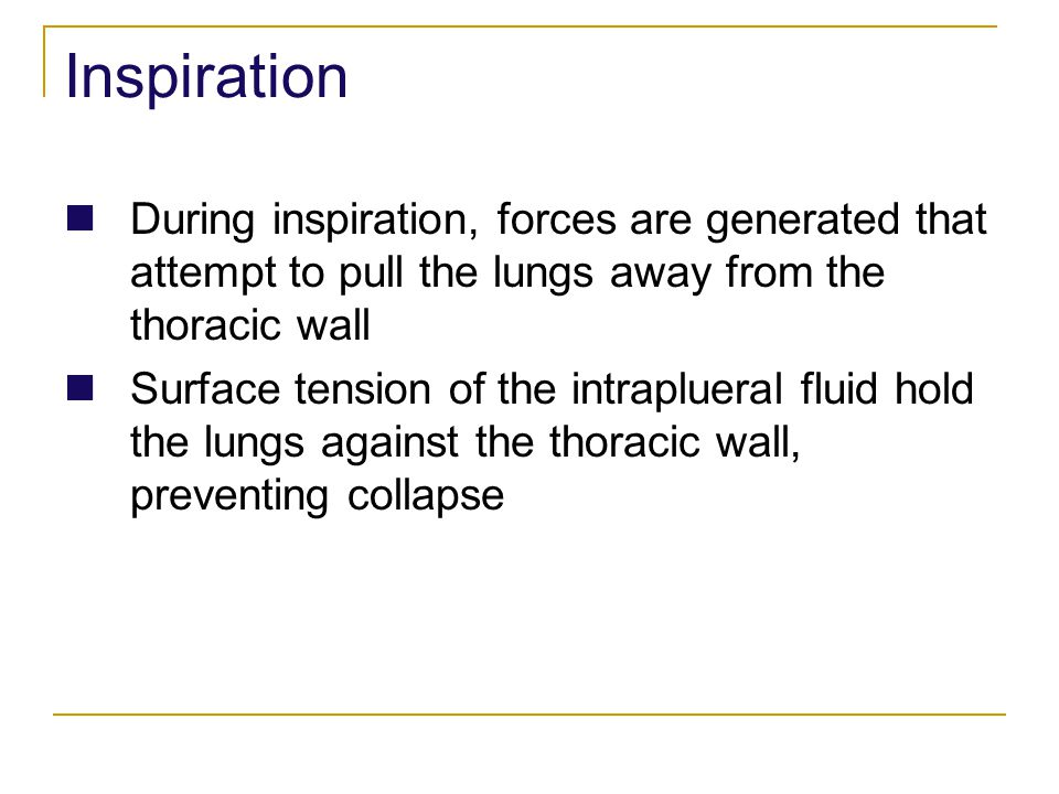 Inspiration During inspiration, forces are generated that attempt to pull the lungs away from the thoracic wall Surface tension of the intraplueral fl