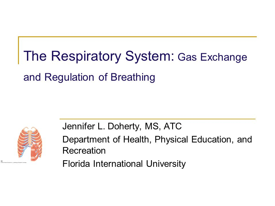 The Respiratory System: Gas Exchange and Regulation of Breathing Jennifer L. Doherty, MS, ATC Department of Health, Physical Education, and Recreation