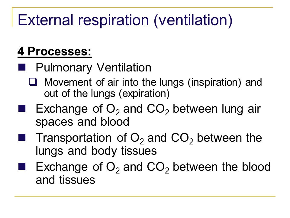 External respiration (ventilation) 4 Processes: Pulmonary Ventilation Movement of air into the lungs (inspiration) and out of the lungs (expiration) E