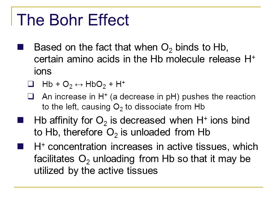 The Bohr Effect Based on the fact that when O 2 binds to Hb, certain amino acids in the Hb molecule release H + ions Hb + O 2 HbO 2 + H + An increase