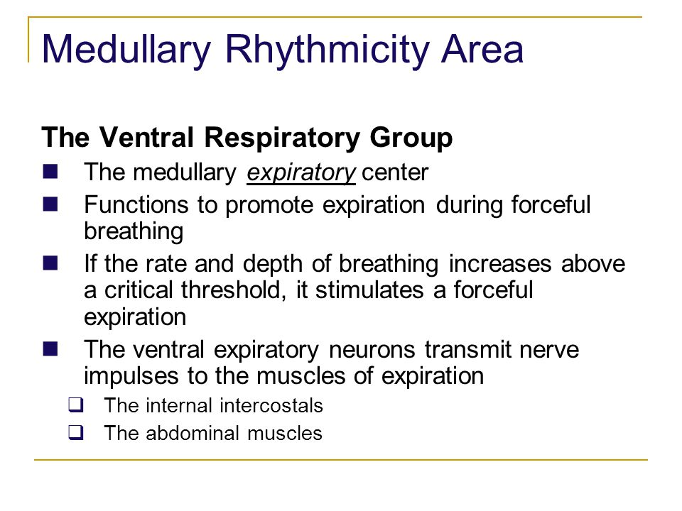 The Ventral Respiratory Group The medullary expiratory center Functions to promote expiration during forceful breathing If the rate and depth of breat
