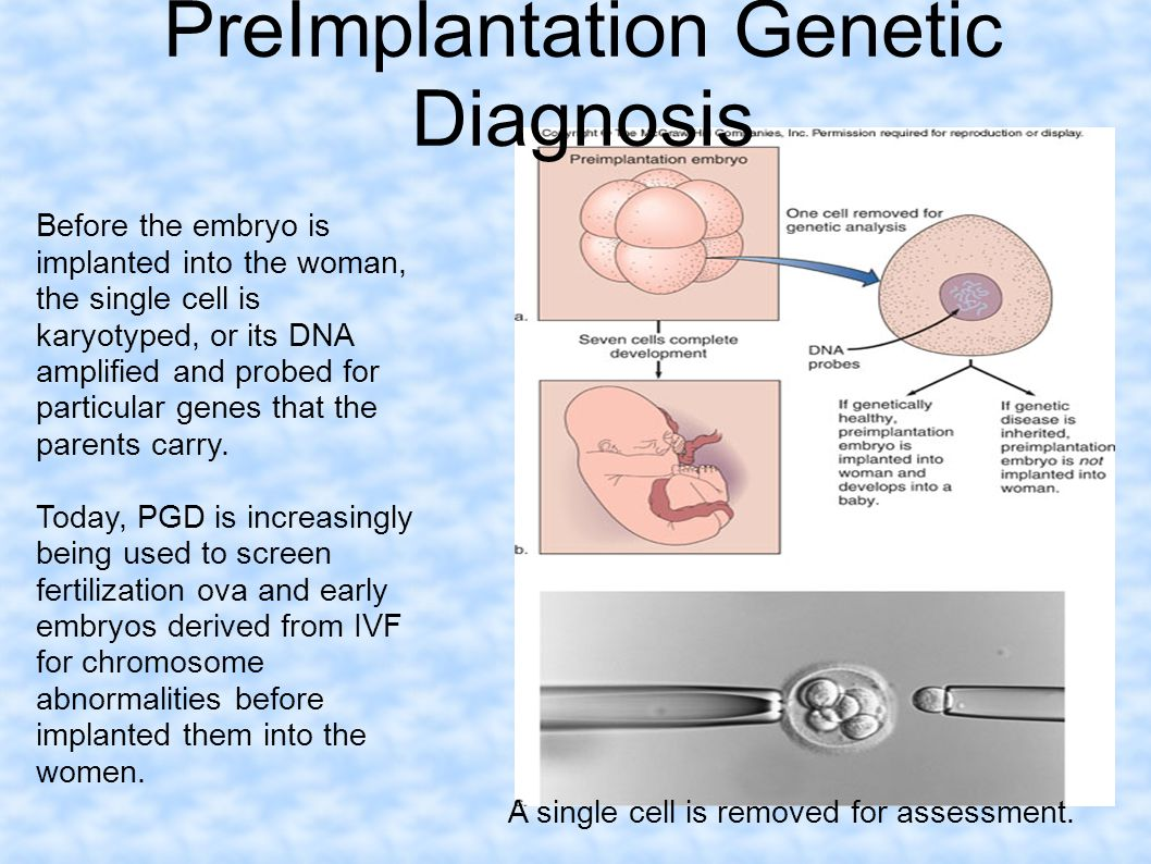 Before the embryo is implanted into the woman, the single cell is karyotyped, or its DNA amplified and probed for particular genes that the parents ca