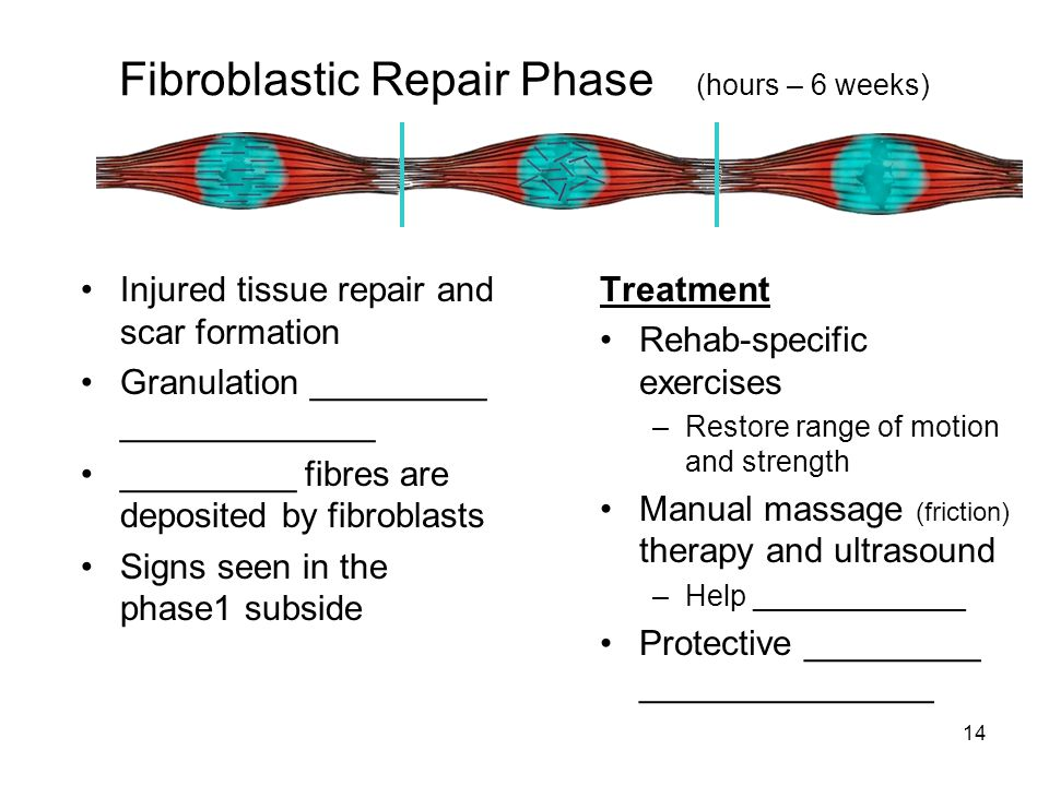 14 Fibroblastic Repair Phase (hours – 6 weeks) Injured tissue repair and scar formation Granulation _________ _____________ _________ fibres are depos