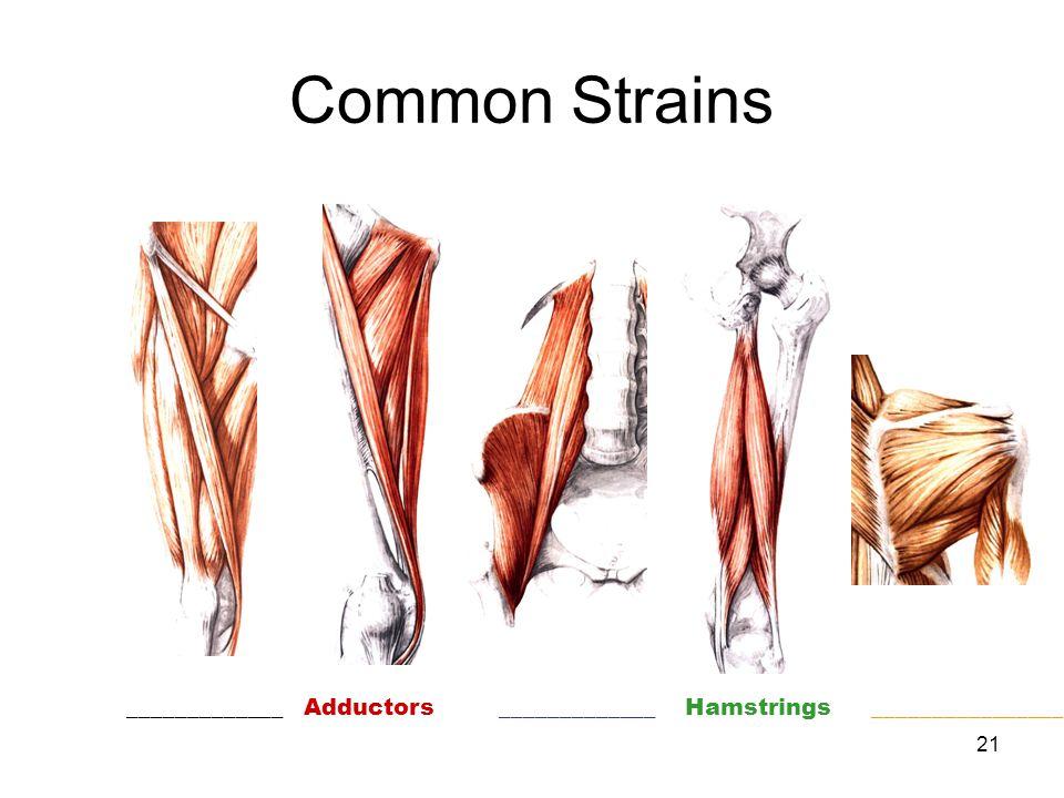 21 Common Strains _____________ Adductors _____________ Hamstrings ________________