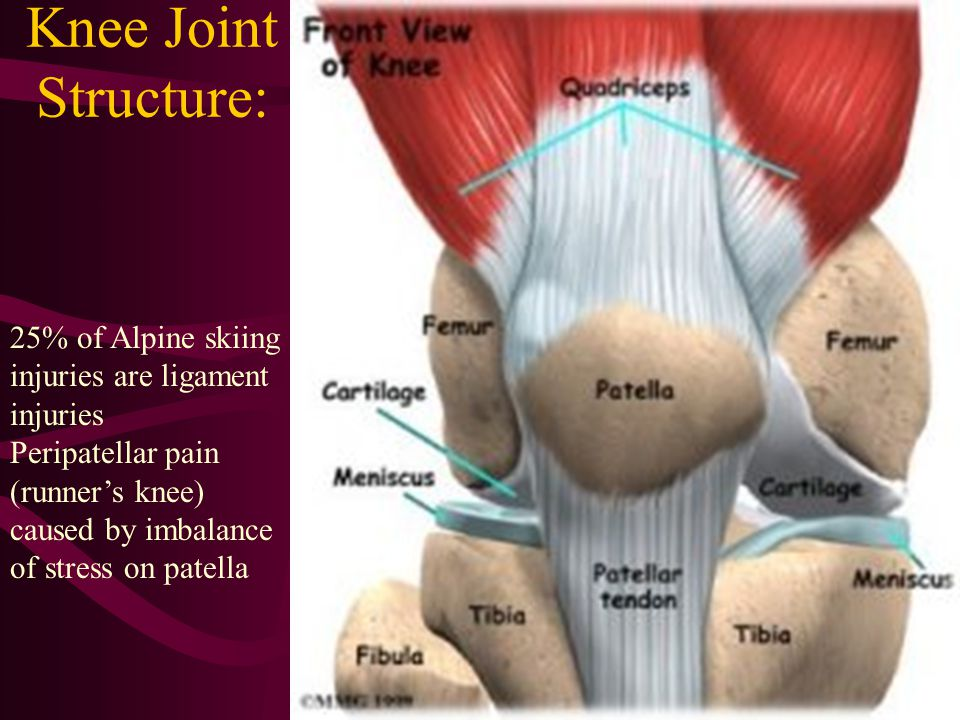 Knee Joint Structure: 25% of Alpine skiing injuries are ligament injuries Peripatellar pain (runners knee) caused by imbalance of stress on patella