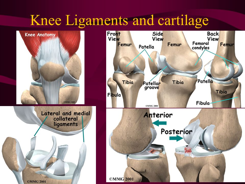Knee Ligaments and cartilage