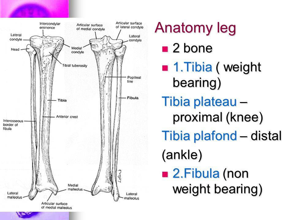 Anatomy leg 2 bone 2 bone 1.Tibia ( weight bearing) 1.Tibia ( weight bearing) Tibia plateau – proximal (knee) Tibia plafond – distal (ankle) 2.Fibula