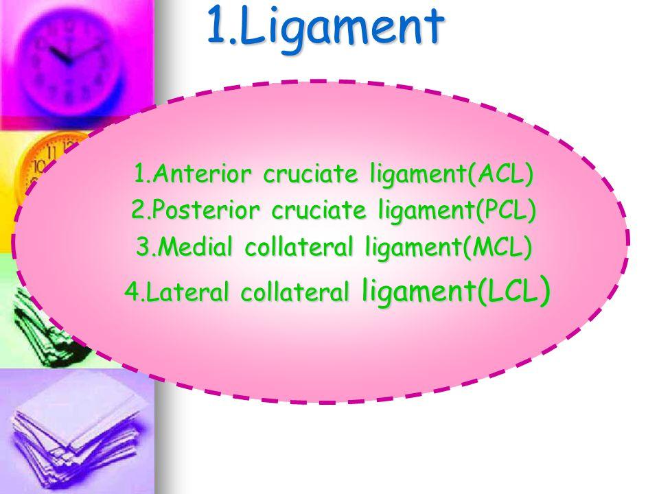 1.Ligament 1.Anterior cruciate ligament(ACL) 2.Posterior cruciate ligament(PCL) 3.Medial collateral ligament(MCL) 4.Lateral collateral ligament(LCL )