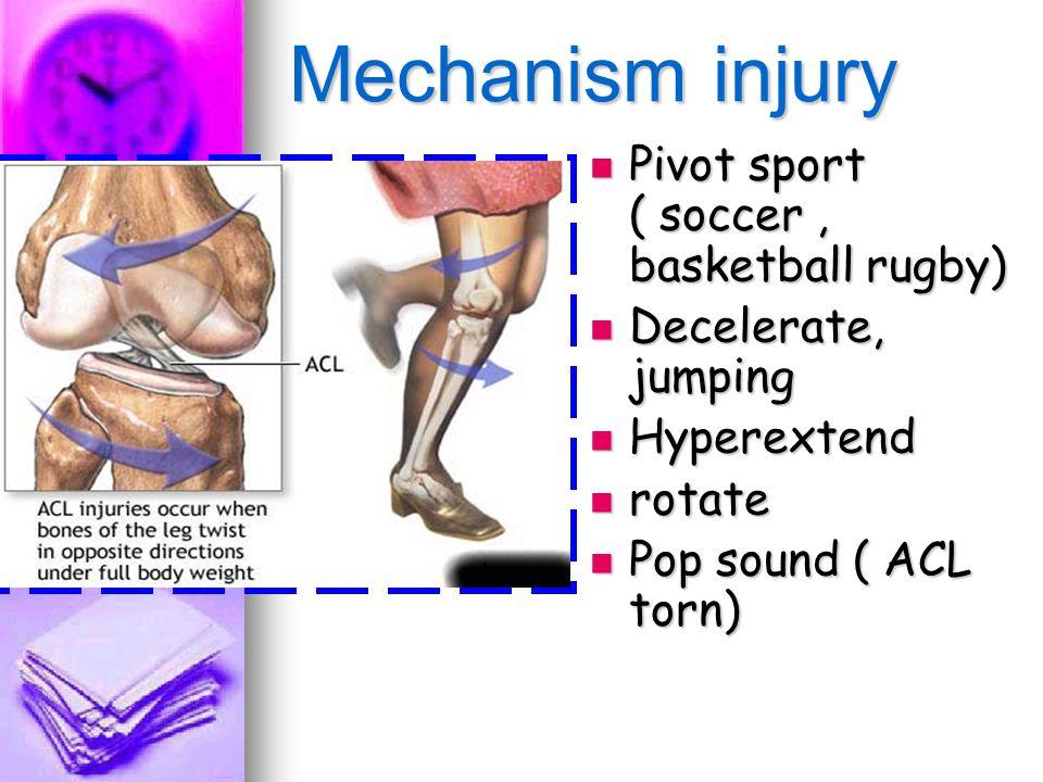 anterior cruciate ligament essay