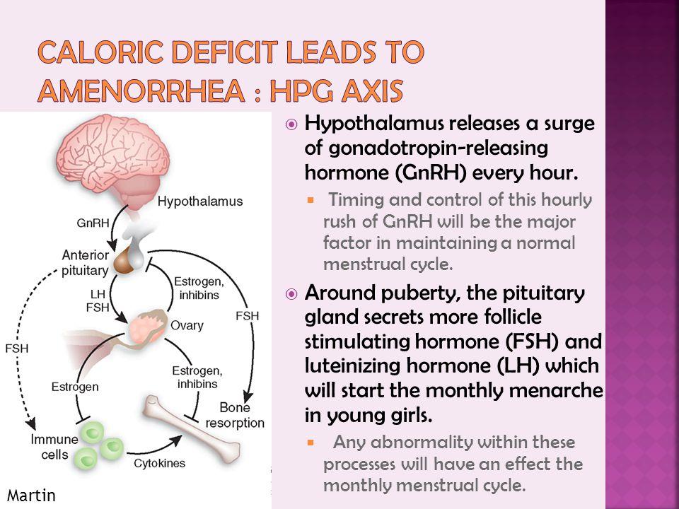 Hypothalamus releases a surge of gonadotropin-releasing hormone (GnRH) every hour.