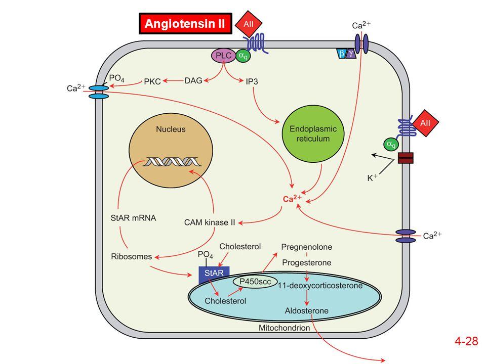 4-28 Angiotensin II
