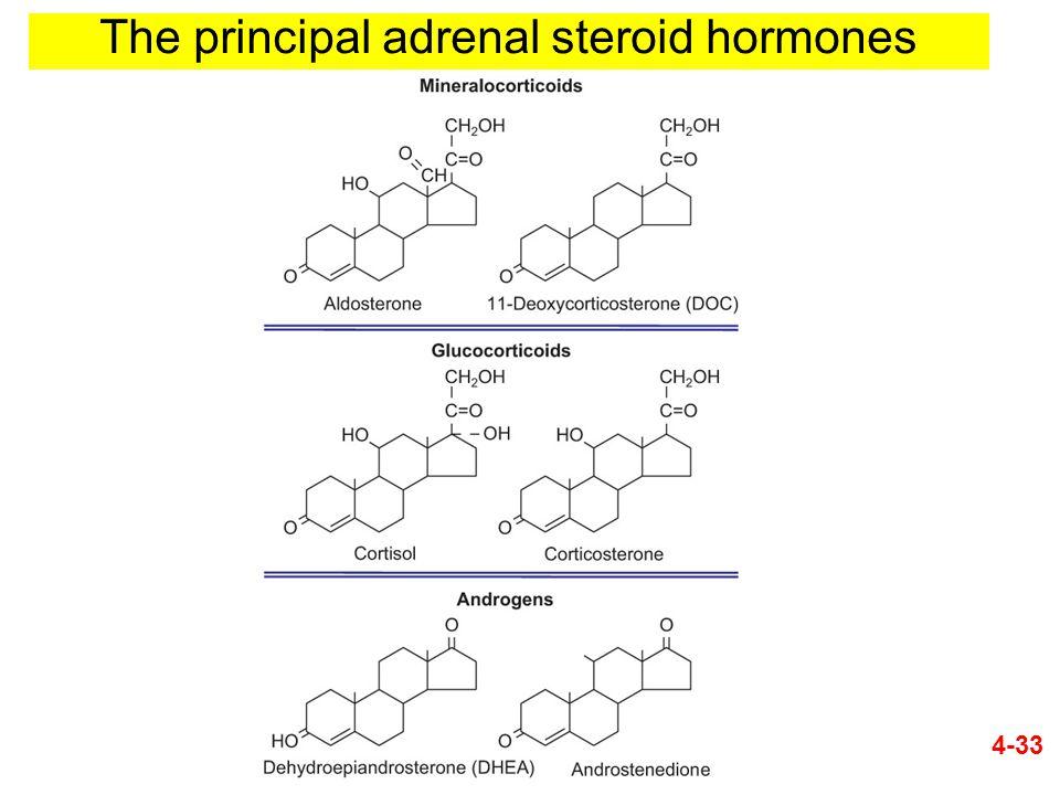 The principal adrenal steroid hormones 4-33
