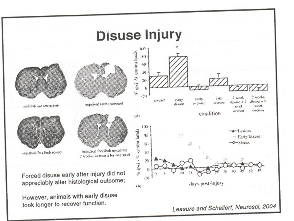 WHAT HAPPENS IF CONCUSSED ANIMAL IS CONFINED POST INJURY? WHAT HAPPENS IF AN ANIMAL IS CONFINED POST INJURY?
