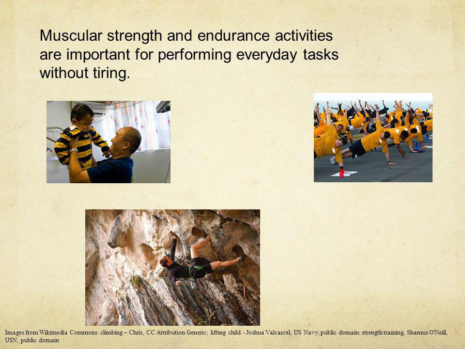 Muscular strength and endurance activities are important for performing everyday tasks without tiring. Images from Wikimedia Commons: climbing – Chris