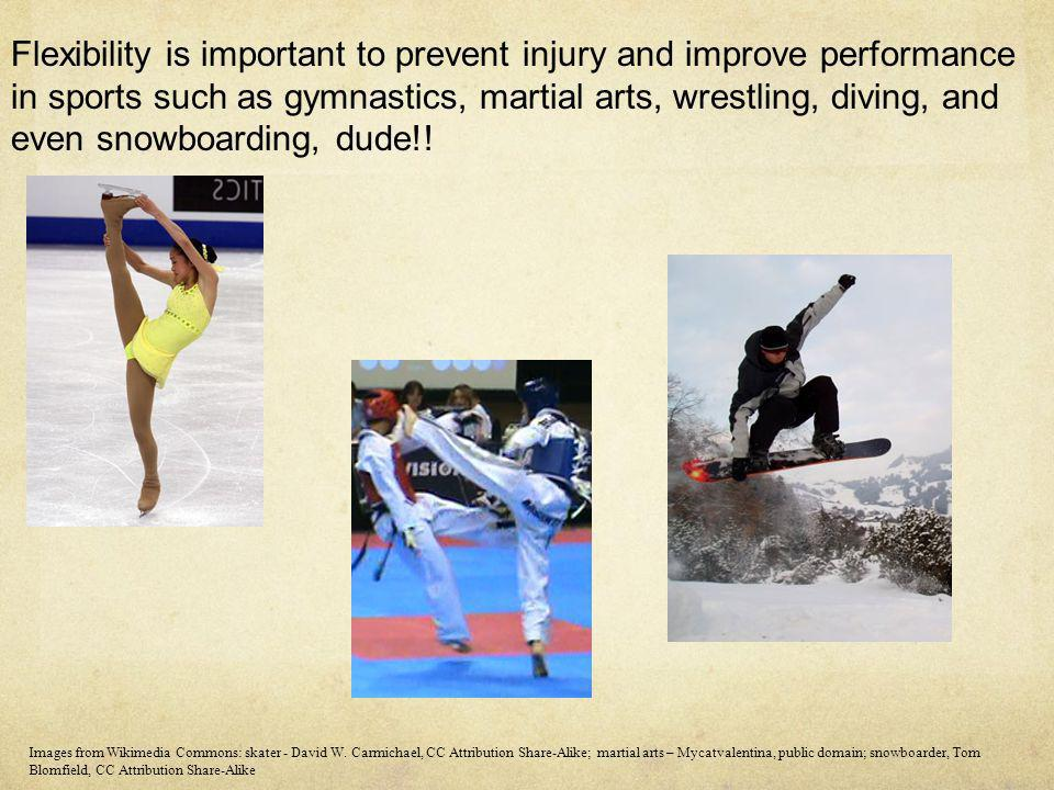 Flexibility is important to prevent injury and improve performance in sports such as gymnastics, martial arts, wrestling, diving, and even snowboardin