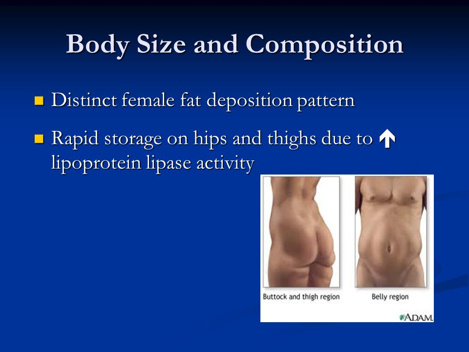 Body Size and Composition Distinct female fat deposition pattern Distinct female fat deposition pattern Rapid storage on hips and thighs due to lipoprotein lipase activity Rapid storage on hips and thighs due to lipoprotein lipase activity