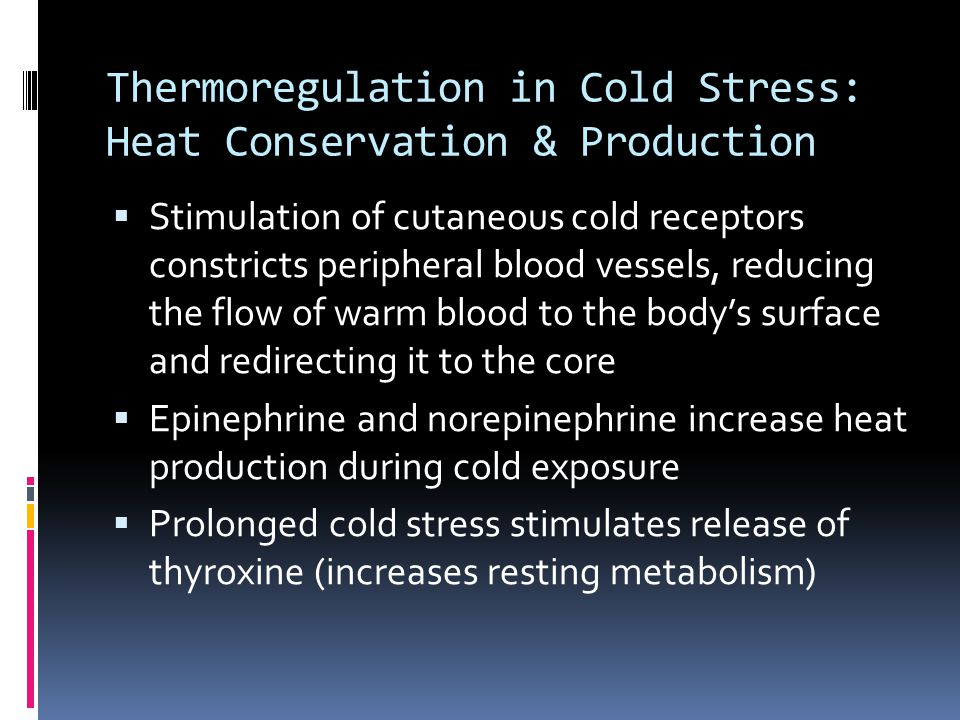 Thermoregulation in Cold Stress: Heat Conservation & Production Stimulation of cutaneous cold receptors constricts peripheral blood vessels, reducing