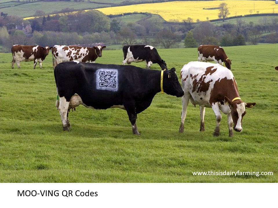 www.thisisdairyfarming.com MOO-VING QR Codes