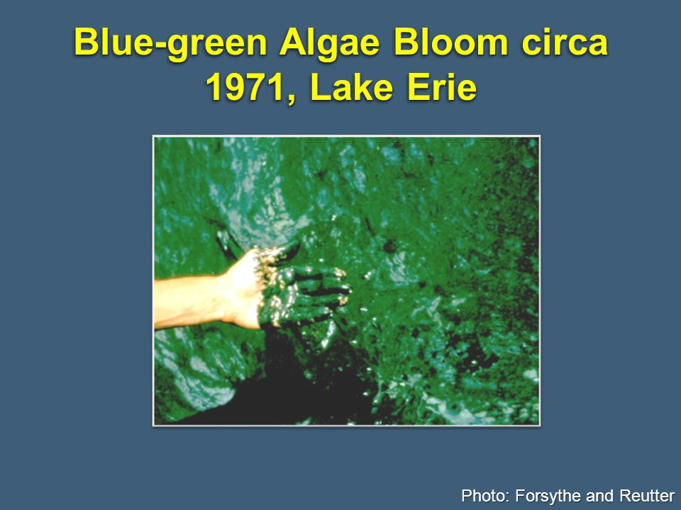 Blue-green Algae Bloom circa 1971, Lake Erie Photo: Forsythe and Reutter