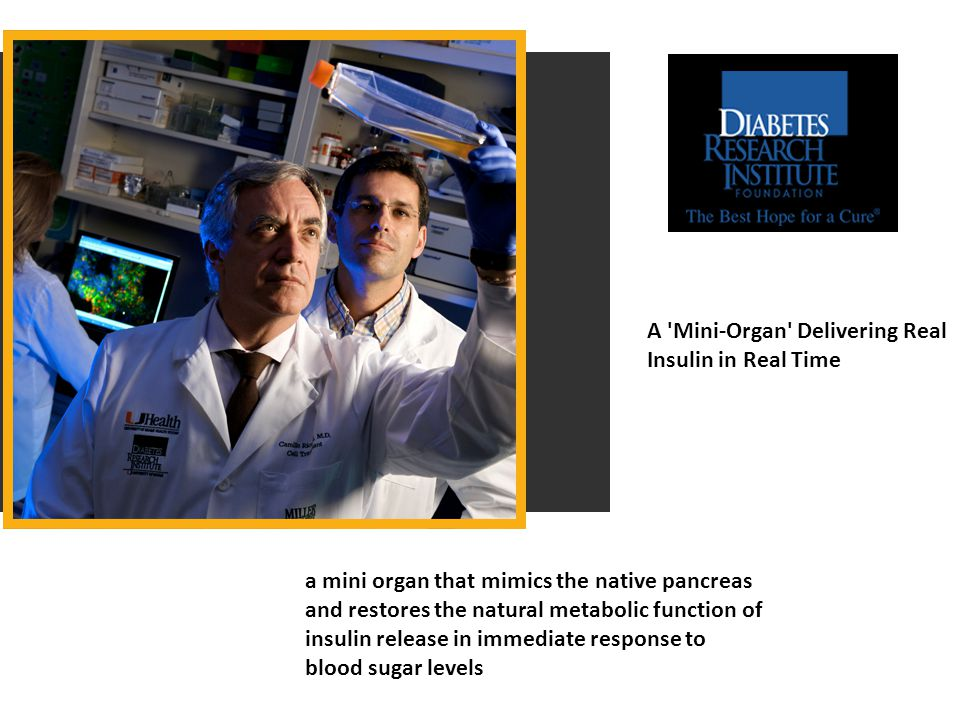A Mini-Organ Delivering Real Insulin in Real Time a mini organ that mimics the native pancreas and restores the natural metabolic function of insulin release in immediate response to blood sugar levels