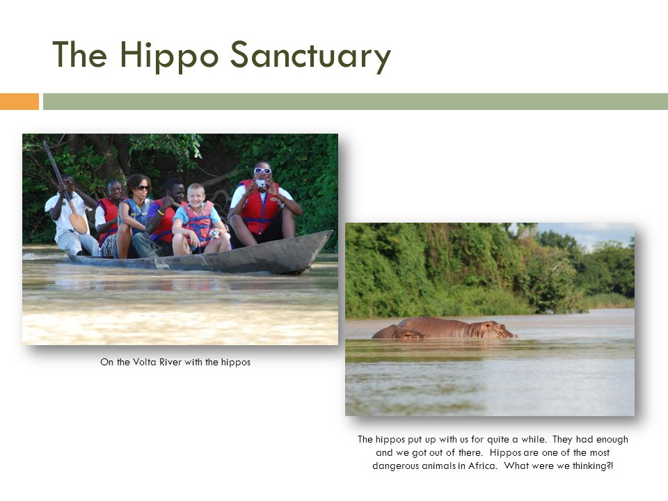 The Hippo Sanctuary On the Volta River with the hippos The hippos put up with us for quite a while.
