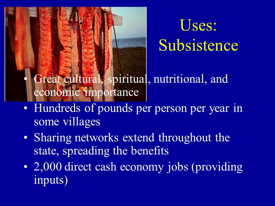 Uses: Subsistence Great cultural, spiritual, nutritional, and economic importance Hundreds of pounds per person per year in some villages Sharing networks extend throughout the state, spreading the benefits 2,000 direct cash economy jobs (providing inputs)