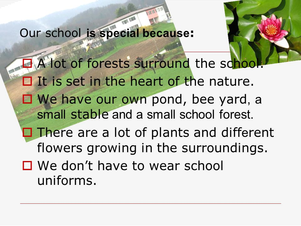 Our school is special because : A lot of forests surround the school.