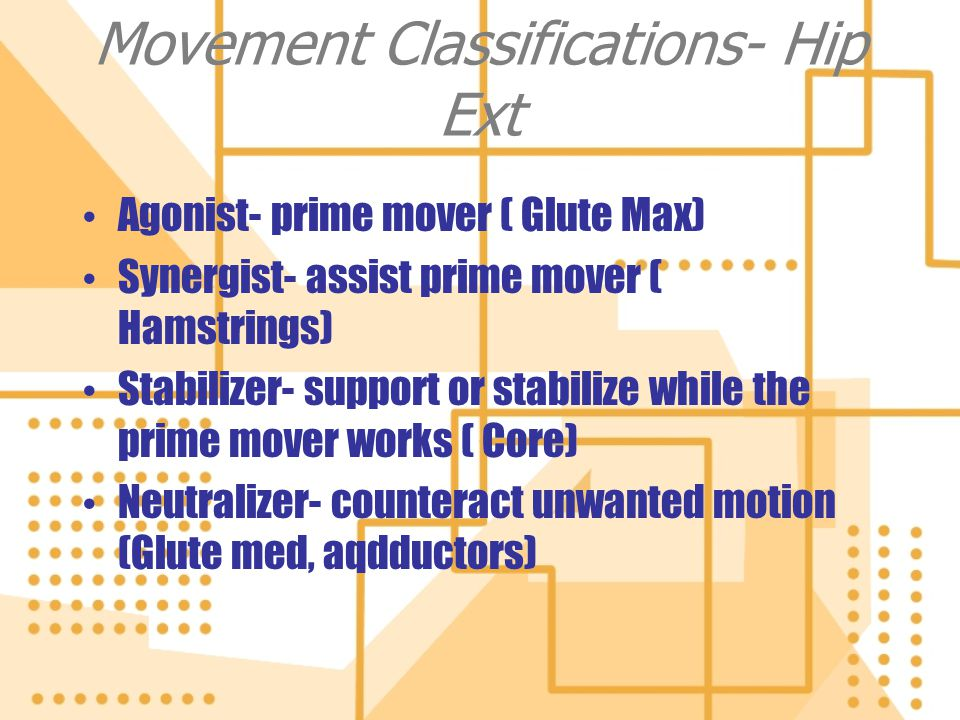 Movement Classifications- Hip Ext Agonist- prime mover ( Glute Max) Synergist- assist prime mover ( Hamstrings) Stabilizer- support or stabilize while