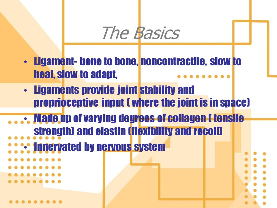 The Basics Ligament- bone to bone, noncontractile, slow to heal, slow to adapt, Ligaments provide joint stability and proprioceptive input ( where the