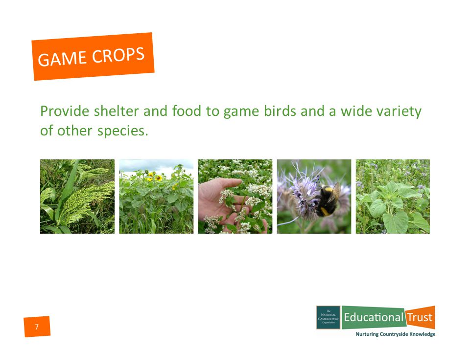 7 GAME CROPS Provide shelter and food to game birds and a wide variety of other species.