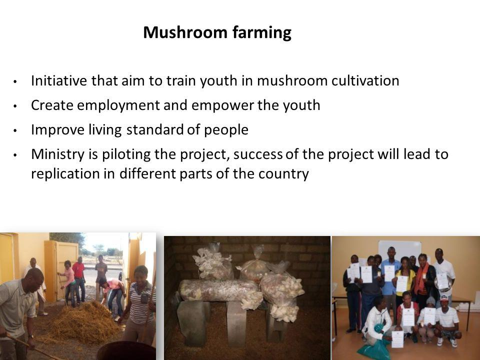 Mushroom farming Initiative that aim to train youth in mushroom cultivation Create employment and empower the youth Improve living standard of people Ministry is piloting the project, success of the project will lead to replication in different parts of the country