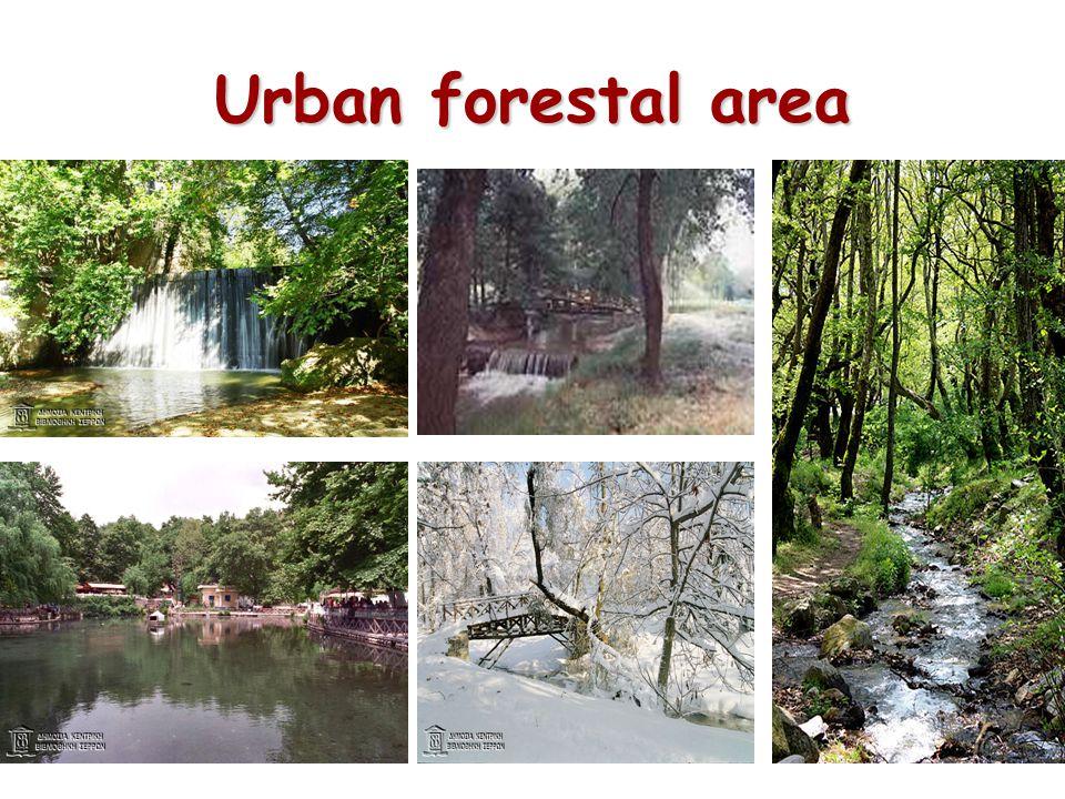 Urban forestal area