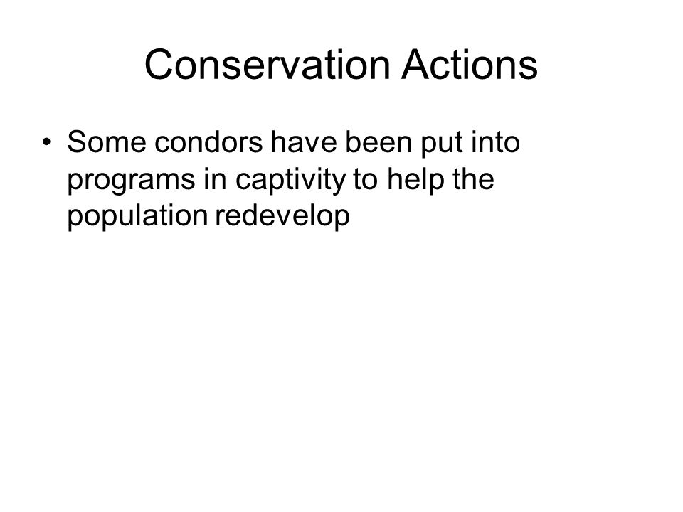 Conservation Actions Some condors have been put into programs in captivity to help the population redevelop