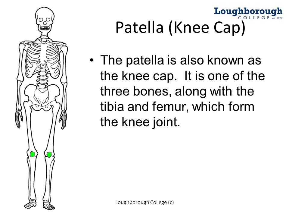 Patella (Knee Cap) The patella is also known as the knee cap. It is one of the three bones, along with the tibia and femur, which form the knee joint.