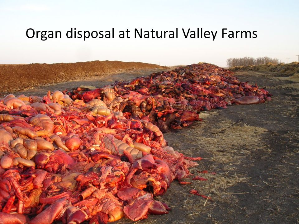 Organ disposal at Natural Valley Farms