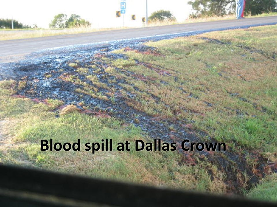 Blood spill at Dallas Crown