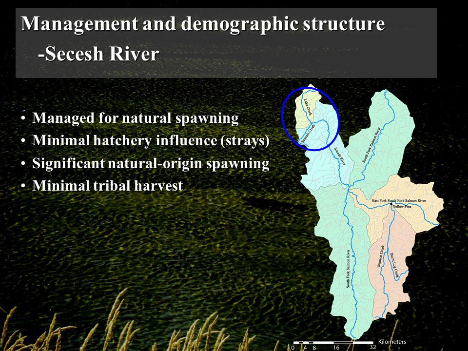 Management and demographic structure -Secesh River Managed for natural spawningManaged for natural spawning Minimal hatchery influence (strays)Minimal hatchery influence (strays) Significant natural-origin spawningSignificant natural-origin spawning Minimal tribal harvestMinimal tribal harvest