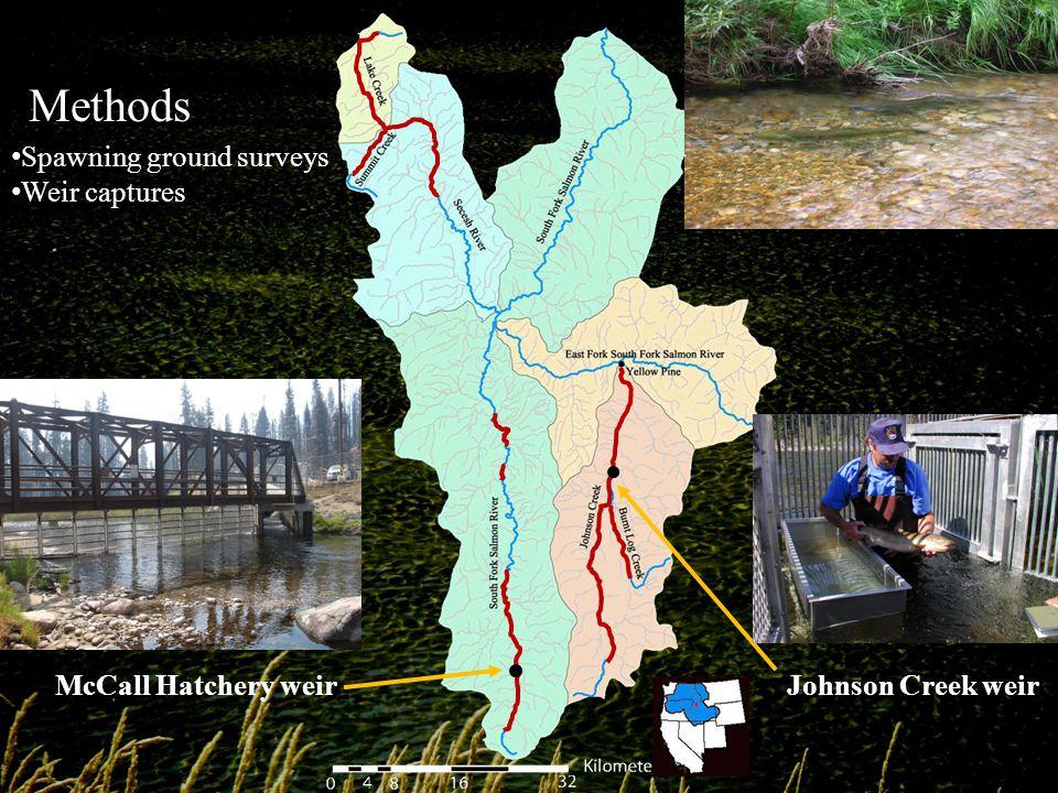 Johnson Creek weirMcCall Hatchery weir Spawning ground surveys Weir captures Methods