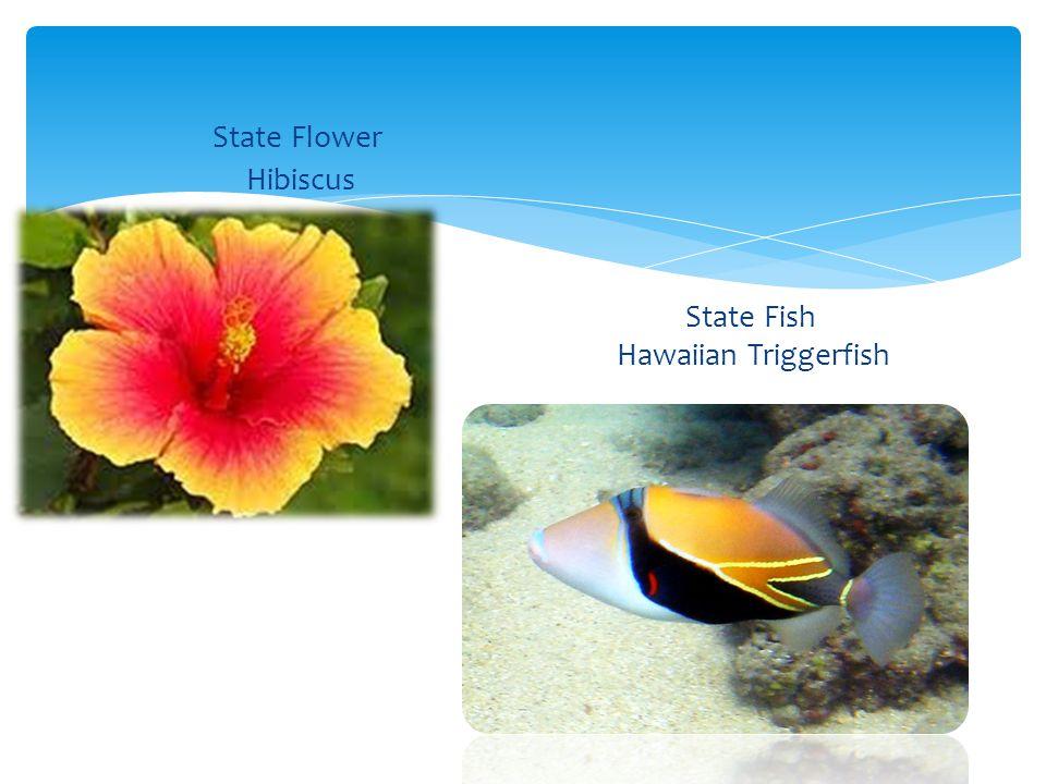 Honolulu Population 341,667 Biggest City in Hawaii