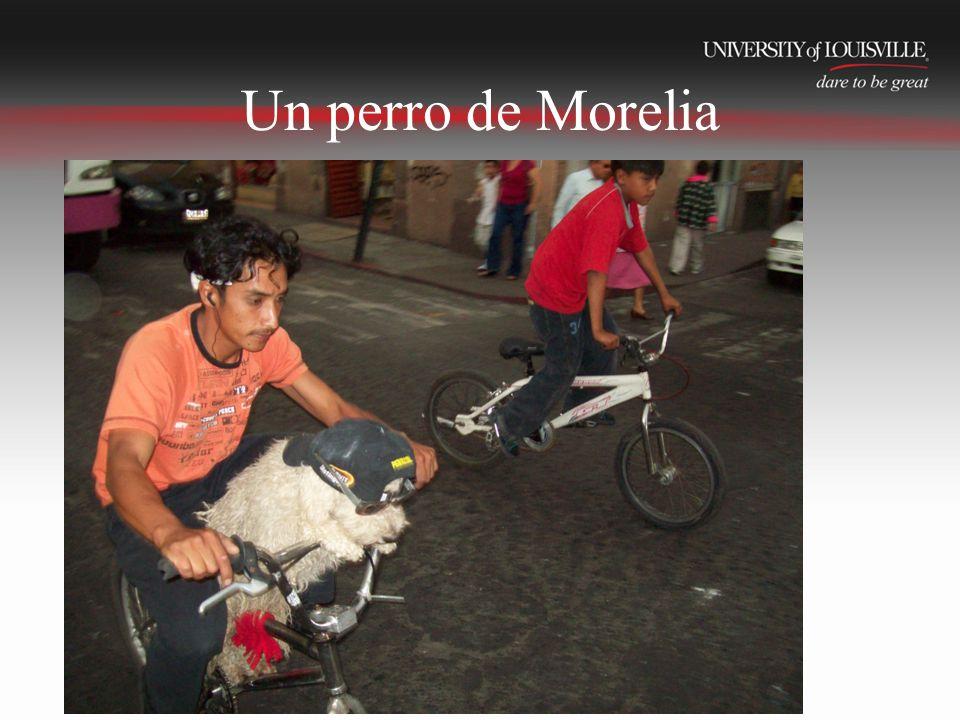 Un perro de Morelia