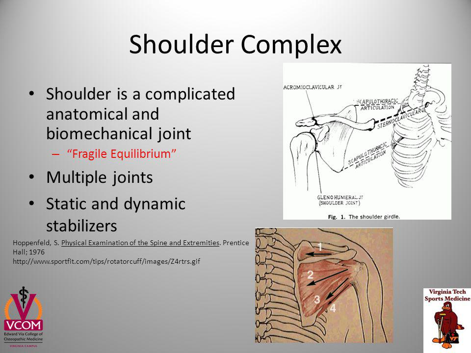 Questions and Demonstration http://www.shoulderdoc.co.uk/images/uploaded/sdoc_ultrasound_07.jpg
