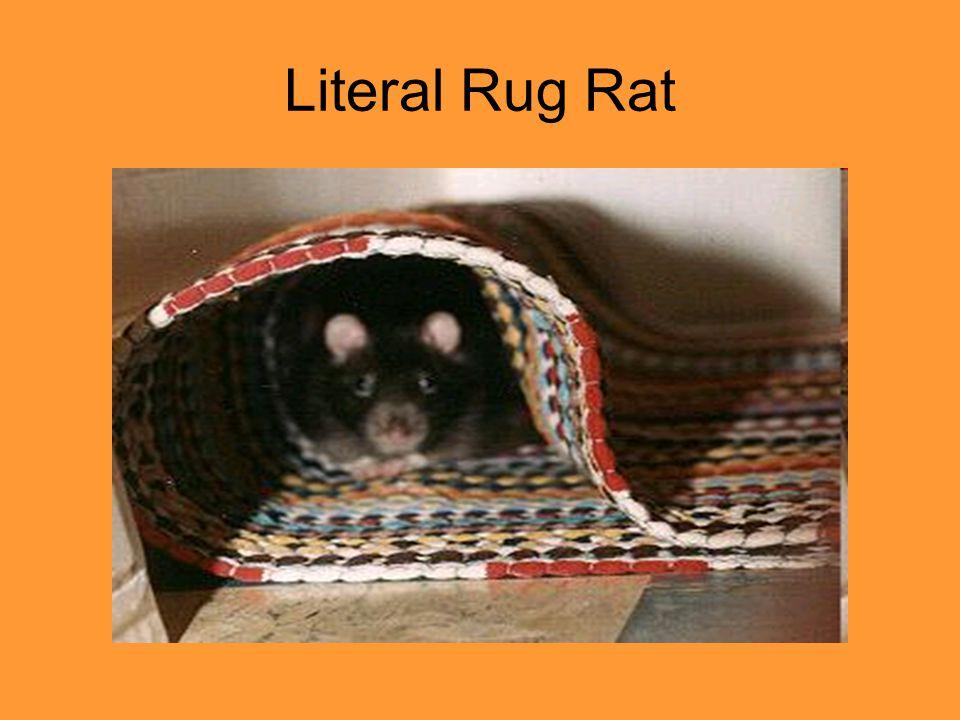 Literal Rug Rat
