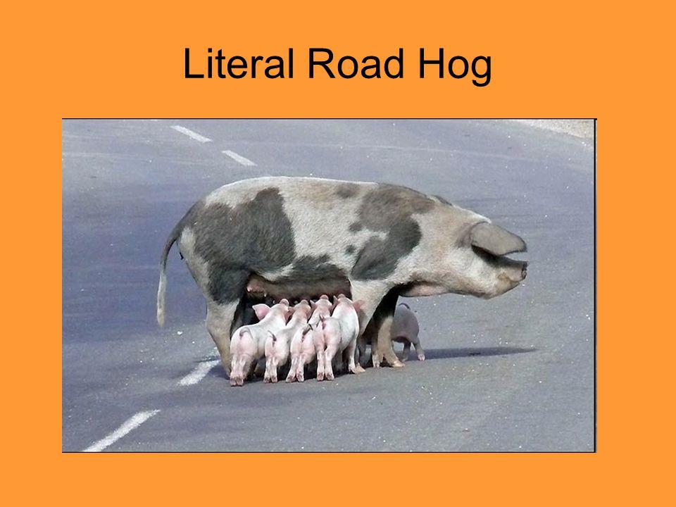 Literal Road Hog