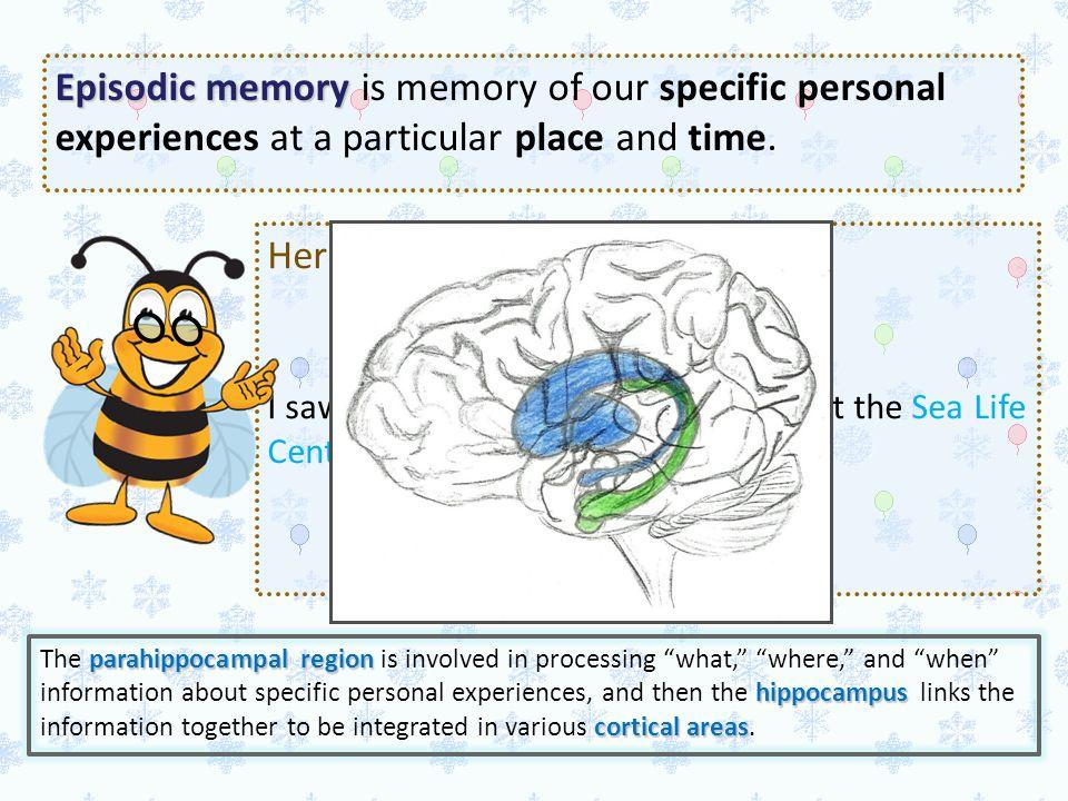 Episodic Memory Episodic Memory is another form of declarative memory. Episodic memory