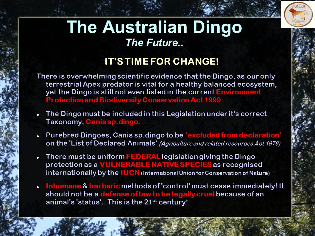 The Australian Dingo The Future.. IT'S TIME FOR CHANGE! There is overwhelming scientific evidence that the Dingo, as our only terrestrial Apex predato