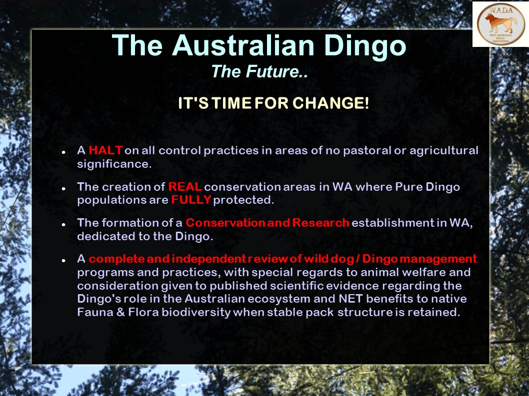 The Australian Dingo The Future.. IT S TIME FOR CHANGE.