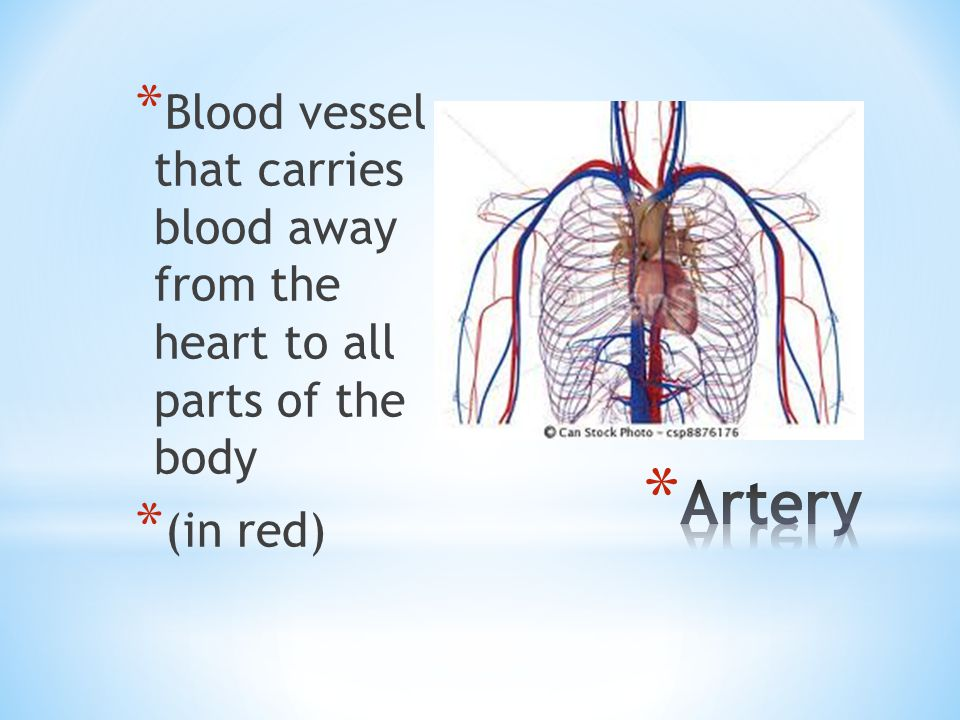 * Blood vessel that carries blood back to the heart from all parts of the body * (in blue)